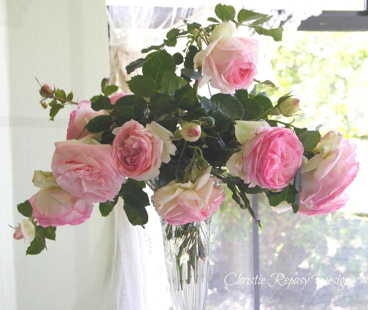 Eden roses
