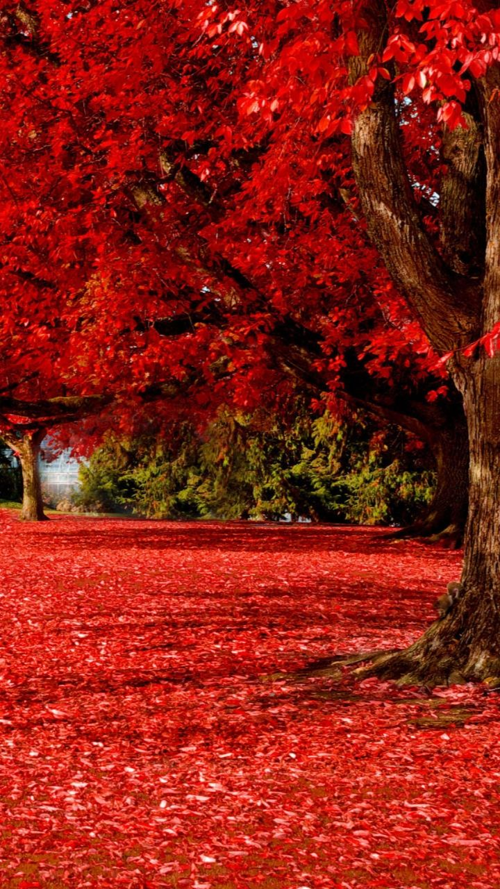Red Autumn | Autumn scenery, Nature photos, Fall pictures