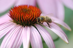 Brushy Mountain Bee Farm - Supplies and Resources