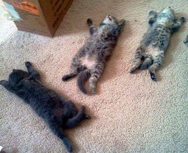 The cutest sleeping kittens I will ever see! :)