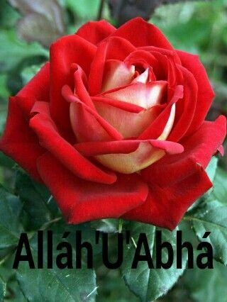 Alláh'u'abhá
