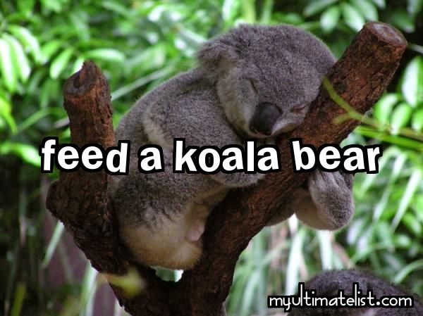 10 Bucket List Ideas for Week of January 13, 2014 Koala Check!!