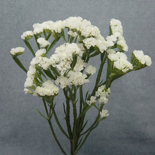 white statice makes a simple, inexpensive centerpiece, bouquet or bouquet filler