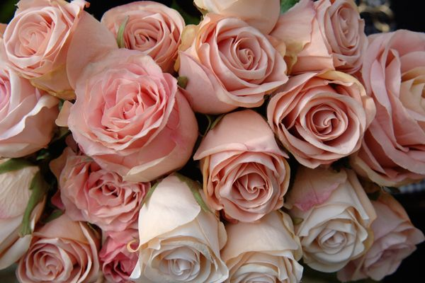 Artificial pink roses. Look like real.:D