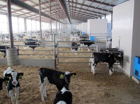 323 best cows dairy images on Pinterest | Cows, Dairy and ...