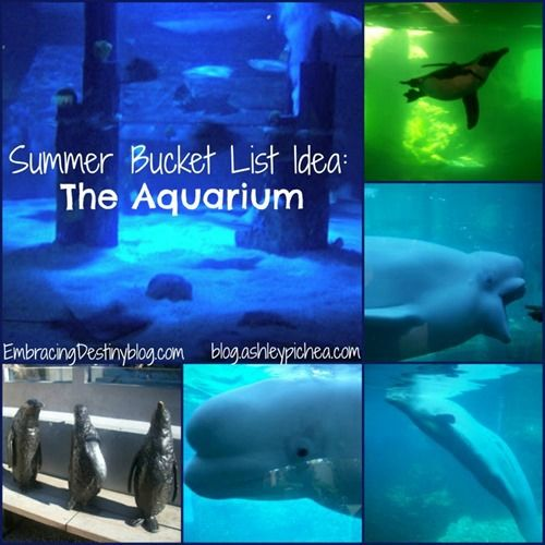Going to the Aquarium | a Summer Bucket List idea on blog.ashleypichea.com