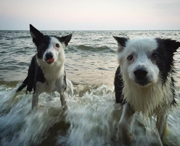 Water fun at Mandeville Lakefront - Mandeville, LA - Angus Off-Leash #dogs #puppies #cutedogs #dogparks #mandeville #louisiana #angusoffleash
