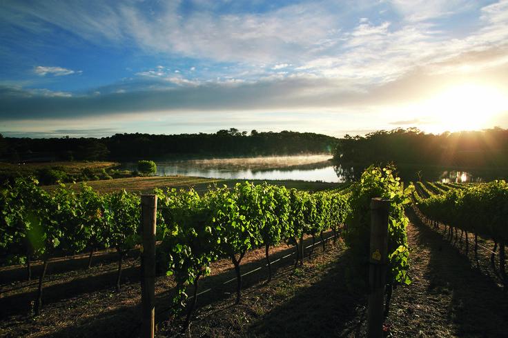 Margaret river- Vineyards