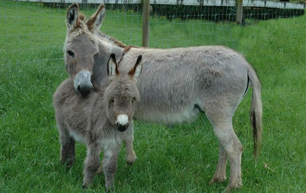 14 Best Images About Donkey Love