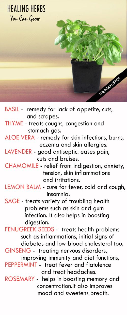 Best Medicinal Herbs You Can Grow At Home.http://tinyurl.com/hd8by6l