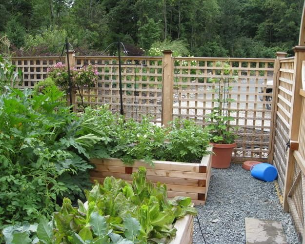 Fenced In Garden Design inspiration ideas garden gates and fences with veggie garden in oregon email add canrabbits have a 20 Raised Bed Garden Designs And Beautiful Backyard Landscaping Ideas