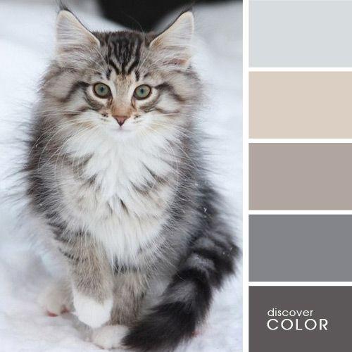 Серый кот | DiscoverColor.ru (Gray Cat)