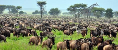 Safari i Tanzania: villmark, regnskog og ville dyr