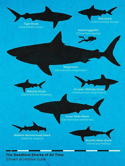 Deadliest sharks! i hope to meet a few when i go scuba diving. just not these dangerous ones...