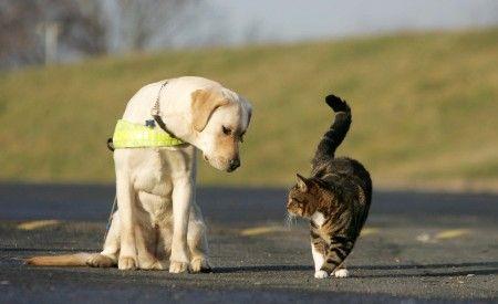 Pronto intervento per soccorso animali in difficoltà - http://www.baubaunews.com/miscellanea/pronto-intervento-per-soccorso-animali-in-difficolta/ http://www.baubaunews.com/wp-content/uploads/2016/10/www.diregiovani.itcodimmagine63314pronto-intervento-animali-f451bcaef0af1ab989a40a148dc5d5479715f401.jpg
