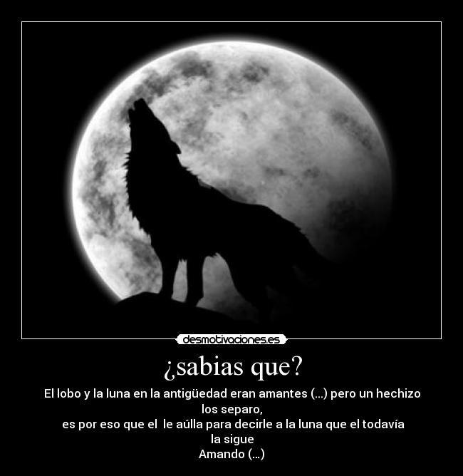 carteles amor separacion desdicha amantes lobo aulla luna llena desmotivaciones