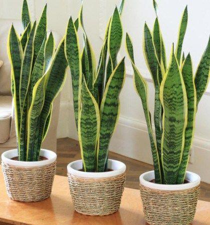 plantas de interior para purificar los ambientes