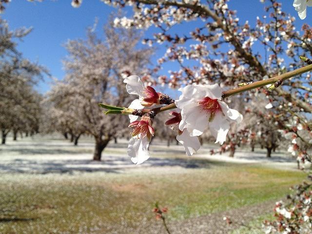 Central California Blossom Trail