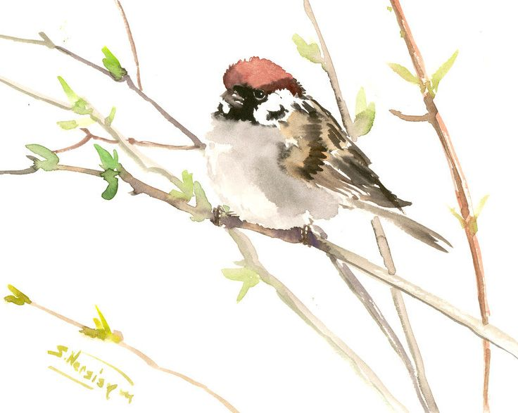 Sparrow art, bird painting, original watercolor brid painting, 10 X 8 in by ORIGINALONLY on Etsy