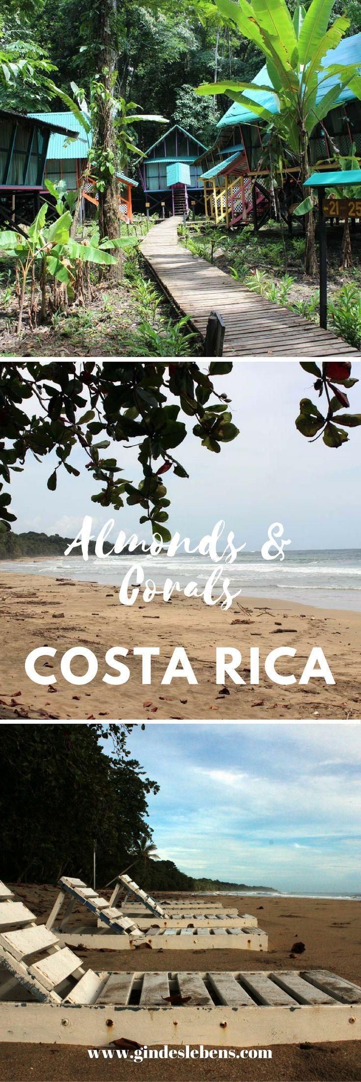 Das Almonds & Corals befindet sich mitten im Dschungel Costa Ricas. Keine Wände, dafür Whirlpool und Himmelbett. Abends schläft man mit den Geräuschen des Dschungels ein. Morgens wird man von den Brüllaffen geweckt... Wir treffen den Besitzer Marco Odio und unterhalten uns mit ihm über die Anlage, die Tierwelt, die Karibikküste und das Wetter in der Regenzeit. www.gindeslebens.com #AlmondsandCorals #Hoteltipp #CostaRica #Dschungel