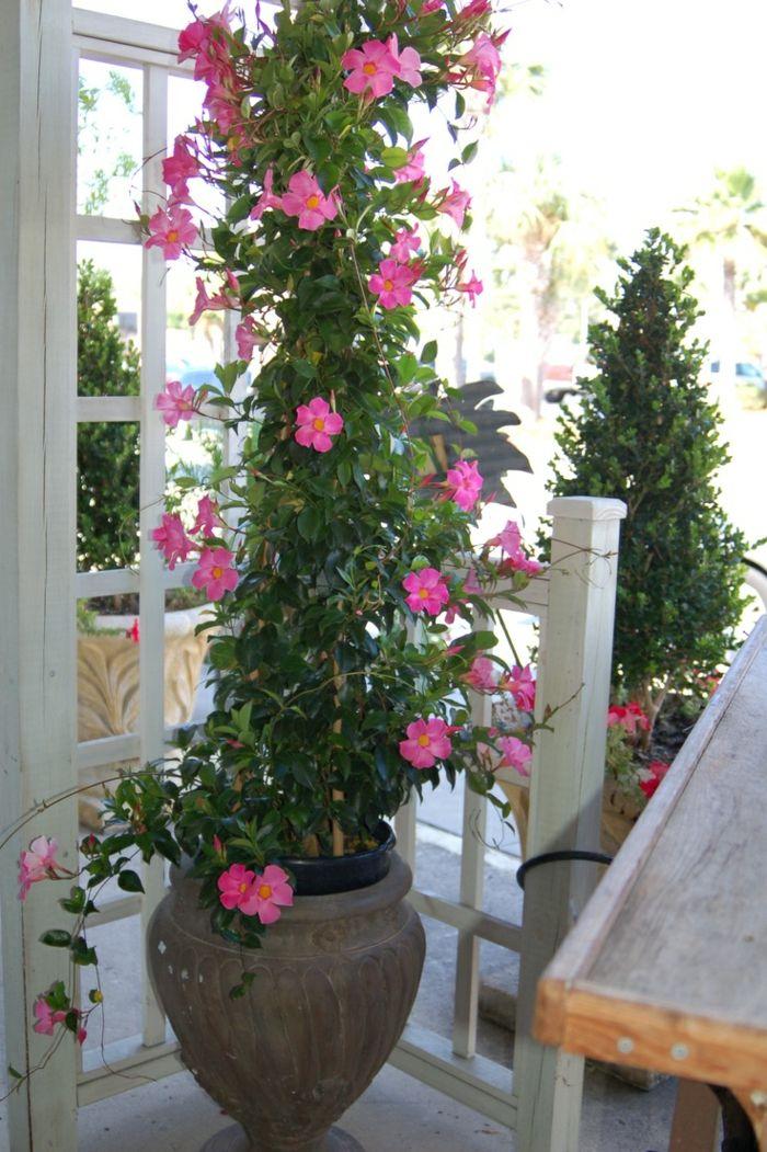Topfpflanzen Und Die Notwendige Fruhlingspflege Garten Pflanzen Topfpflanzen Kubelpflanzen
