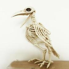 Skeleton Raven100% Plastic Animal Skeleton Bones for Horror Halloween Decoration