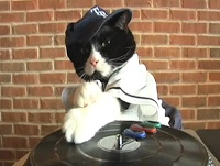 How To Turn Your Cat Into DJ Kitty   Rays Rally   Tampa Bay Rays Blog & Fansite