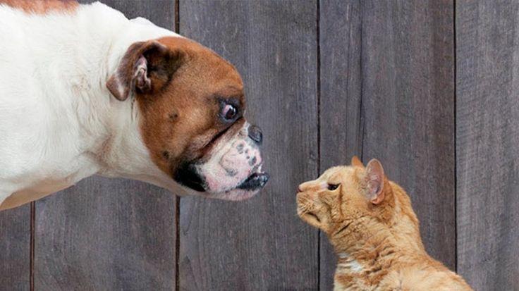 Почему собаки и кошки не любят друг друга? http://kleinburd.ru/news/pochemu-sobaki-i-koshki-ne-lyubyat-drug-druga/  «Живут как кошка с собакой». С давних времён собаки и кошки испытывают взаимную неприязнь. Владельцам собак, особенно крупных, с трудом приходится удерживать своего питомца, увидевшего кошку. Да и среди кошек встречаются особи, бросающиеся в драку на добродушного пса. У большинства из нас есть домашние животные, но редко кто задается вопросом, какие же причины могут выражать…
