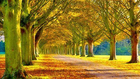 Yellow Color Autumn Tree Nature photos