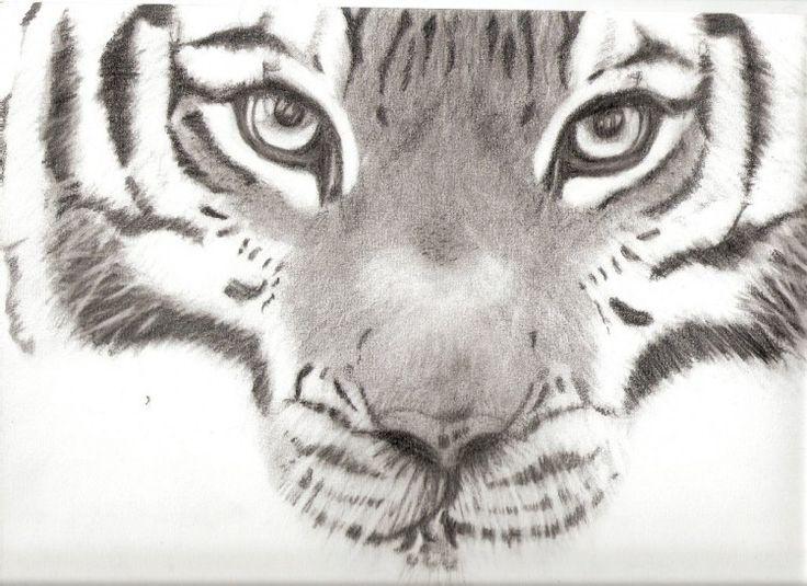 Les 25 meilleures id es de la cat gorie comment dessiner tigre sur pinterest easy things to - Dessin de tigre facile ...