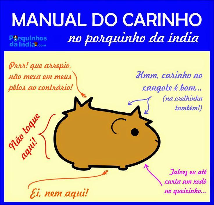 Porquinhos da Índia : Manual do Carinho ♥ www.porquinhosdaindia.com