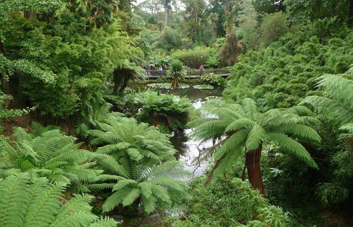 The Jungle Garden, Lost Gardens of Heligan, Cornwall