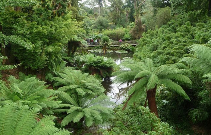 The Lost Gardens of Heligan in Cornwall - a riot of tropical plants!