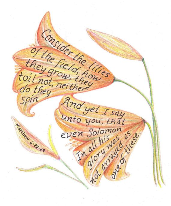 """Consider the lilies of the field, how they grow, they toil not, neither do they spin And yet I say unto you, that even Solomon in all his glory was not arrayed as one of these.  Matthew 6:28-29; Consider the lilies drawing inspirational bible by LindaRobbsArt, $10.00"