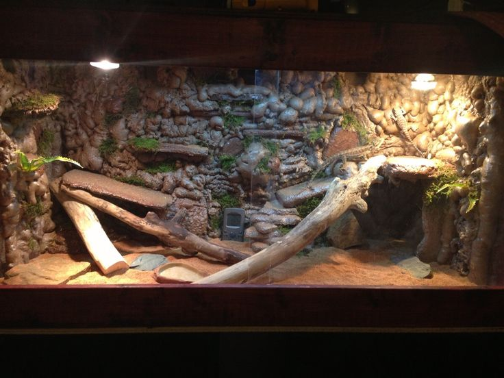 38 Best Images About BEARDED DRAGON ENCLOSURES On