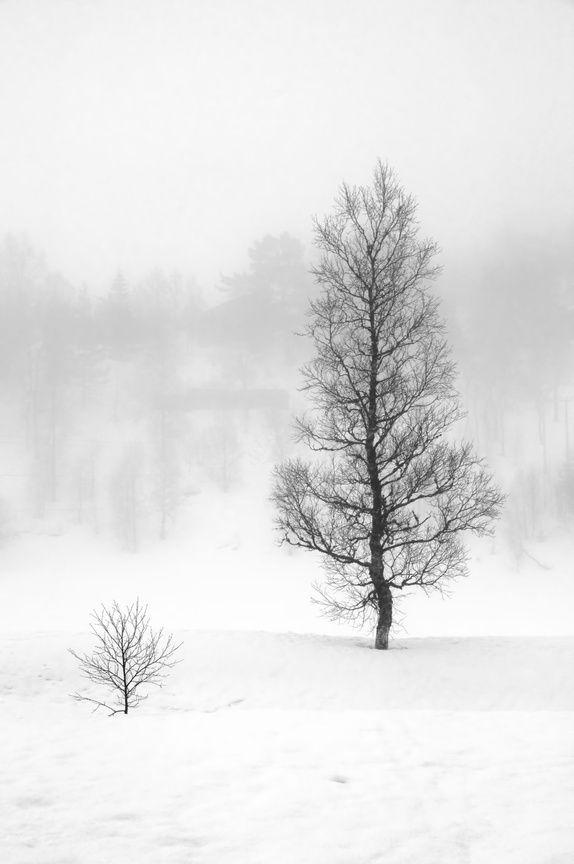Bjørk i tåke (Aluminium 70x100cm) #fotografi #fotokunst #natur landskap #svart #hvitt #julegave #gaver #interiør