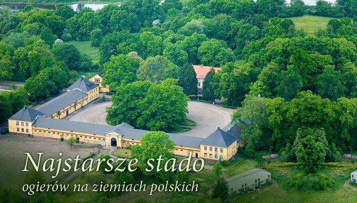 Stallion Sieraków - Polish stud farm at Sierakow