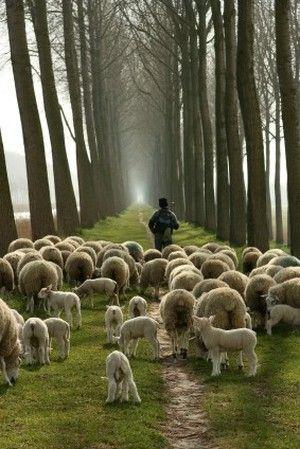Psaume 23:1 - L'Eternel est un bon berger qui ne délaisse point ses brebis. Il prend soin d'elles, il veille sur elles, Il leur parle, Il les conduit, Il les nourrit, les protège, les soigne... Même dans la vallée des épreuves, il est présent. Il les rassure en continuant à les guider. Il n'abandonne JAMAIS. Car sa volonté est que nous vivions et non que nous mourrions, que nous soyons victorieux et non vaincus, que nous soyons libres et non liés, que nous avancions et non que nous…