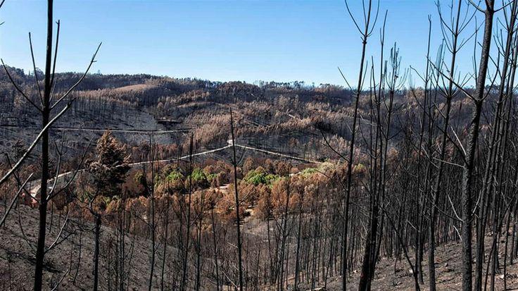 Os seus terrenos foram atingidos pelos incêndios florestais? - https://ovotv.pt/local/os-seus-terrenos-foram-atingidos-pelos-incendios-florestais/
