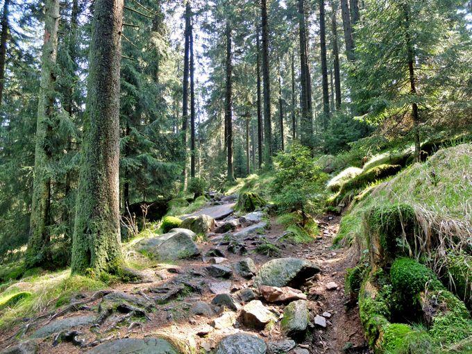 Die Wanderung von Altenau zur Wolfswarte führt durch märchenhafte Tannenwälder, vorbei an alten Bewässerungsanlagen und bietet tolle Ausblicke - eigentlich...