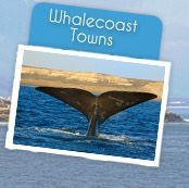 Hermanus Tourism - Accommodation, Things to do, Restaurants, Activities in Hermanus, Whale Coast, South Africa