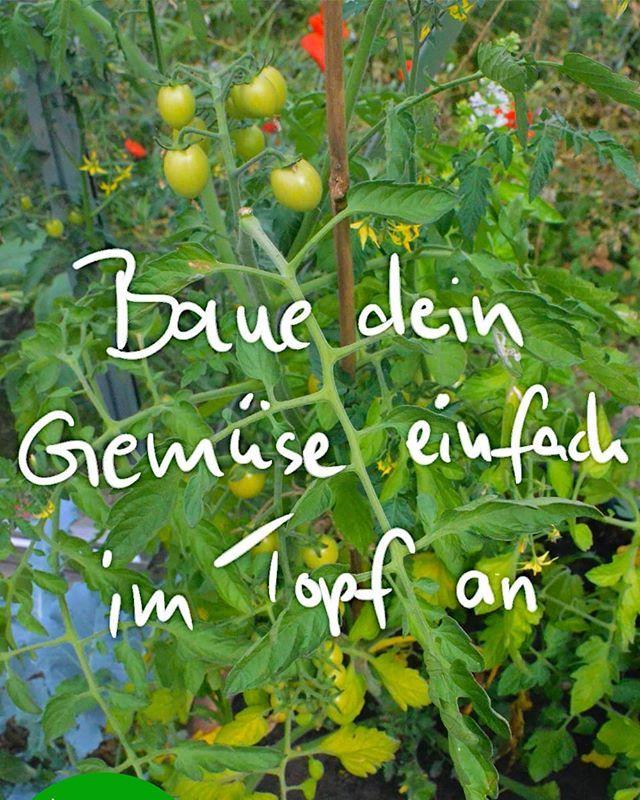 Der Heutige Blogbeitrag Ist Fur Anfanger Gemuse Anbauen Im Topf Ich Muss Schon Sage Growing Vegetables Container Gardening Vegetables Gardening For Beginners
