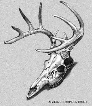 Deer Skull Tattoo Designs | Posted December 23rd, 2010 by MARTCH24
