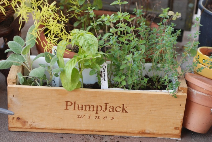 Herb planter in wine boxHerbs Planters, True Values, Wine Boxes, Kitchens Doors