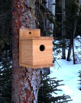 Vogelhuisje maken | Stappenplan | Zelf tuinieren
