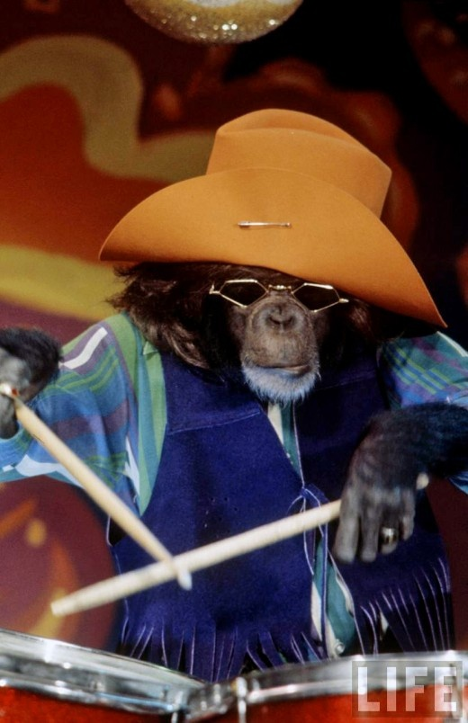 Drummer chimp: