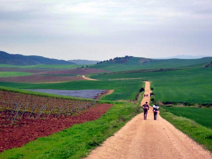Camino hacia Los Arcos (Navarra)