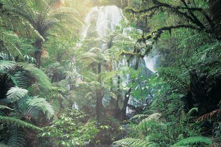 Beautiful #waterfall among the #ferns at Treetops Lodge & Estate - Rotorua, North Island, New Zealand - Luxury Hotel Vacation from Classic Vacations