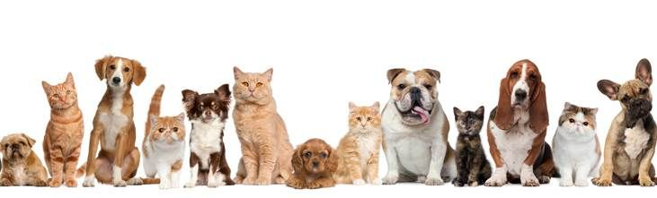 At Wridgways we can move all your furry friends great and small, safely to their new home! http://www.wridgways.com.au/services/pet_transport_services.htm #pets #pettransport