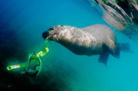 SNORKELING Photo by Enrique del Campo — National Geographic Your Shot